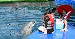 Meet with Dolphins Marmaris