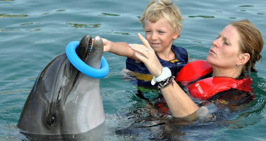 Swim With Dolphins Marmaris